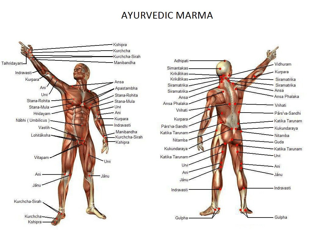 Visual presentation of all lethal mar,a with muscle view